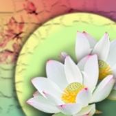 Čakrární aromaterapie